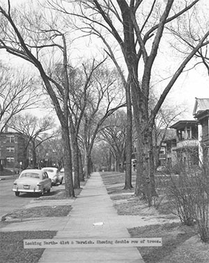 An undated photo of the block showing the street trees that many said were among the finest in Kansas City. Courtesy Kansas City Public Library, Missouri Valley Special Collections.
