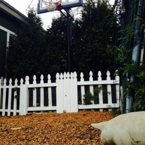 Surely a pig may look at a basketball hoop.