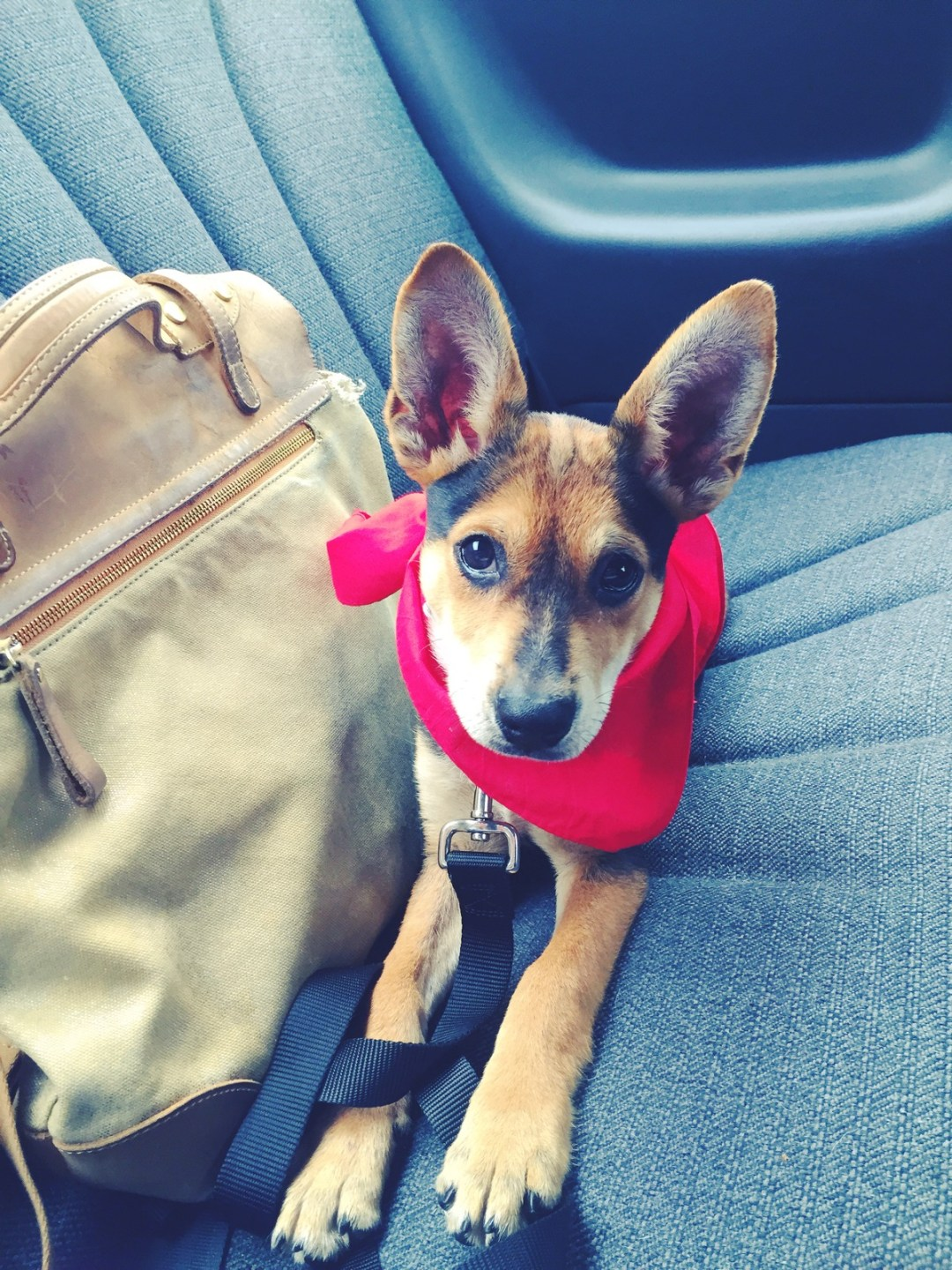 Puppy Love | Meet Kero