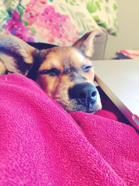 Puppy Love   Meet Kero