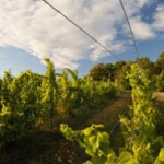 Sustainable Suggestions From Michigan's Good Neighbor Winery