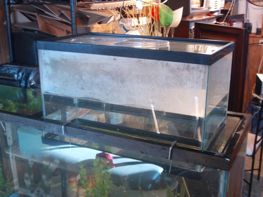 Upside down aquarium half full of water creuzer for Inverted fish tank