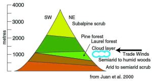A schematic cross-section of a Canary Island. The laurel-dominated rainforest is a wedge between the semiarid country below and the pine forest above.