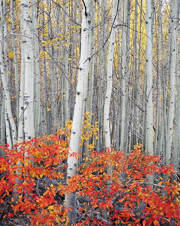Bend, Oregon, Aspen Grove