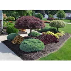 Favorite Landscape Design Idea Outside A Landscaping Ideas Basic Backyard Landscape Basic Backyard Landscape Ideas