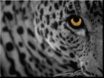 Άργησε το Leopard ? Δεν πειράζει .