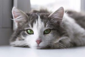 Milben Bei Katzen Bekampfen Ratgeber Hilfe Was