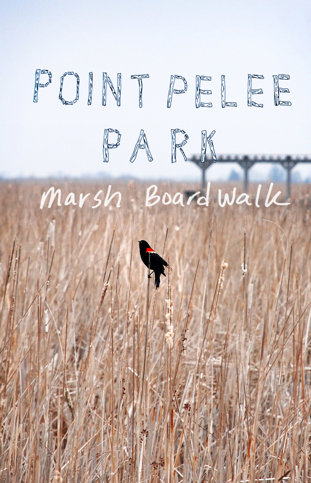Point Pelee National Park: The Marsh Boardwalk