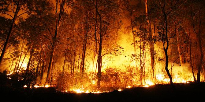 Panglima TNI: Sekat Kanal & Embung Air Solusi Atasi Kebakaran Lahan