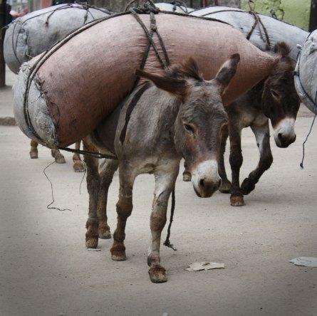 donkey-bomb-2