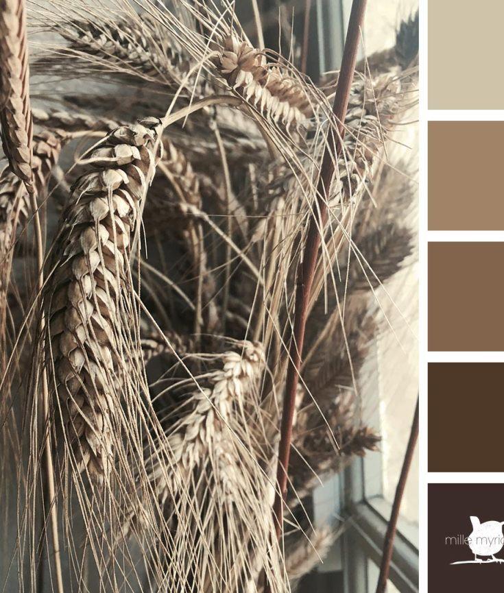 blé ancien charte couleurs