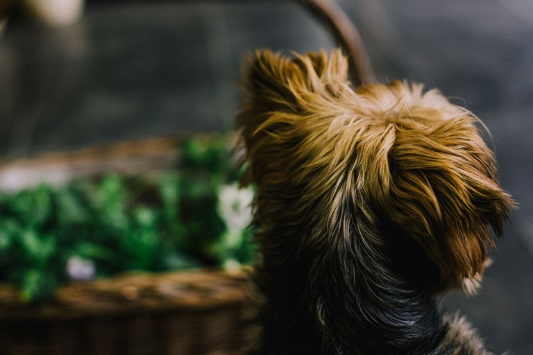 Pet Friendly Businesses- millennials trends