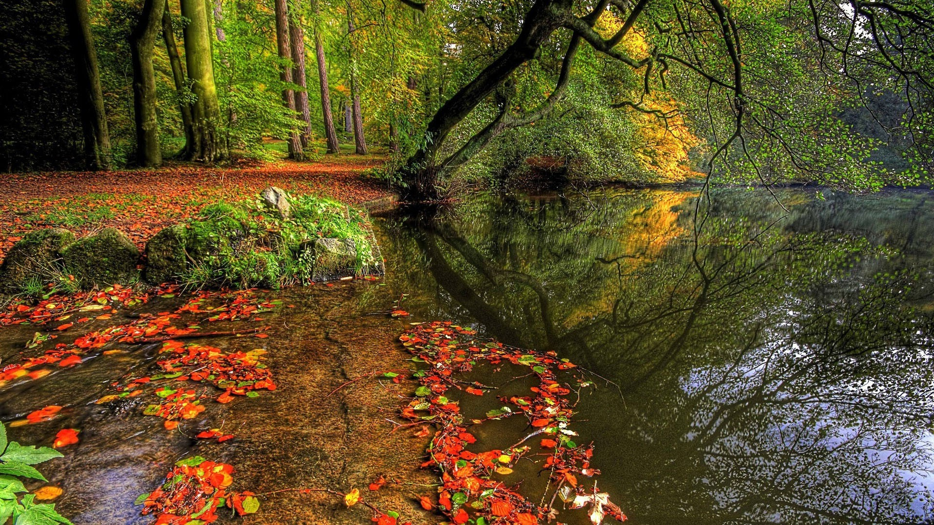 Free Computer Wallpaper Fall Leaves Pond In Autumn In The Woods Android Wallpapers For Free