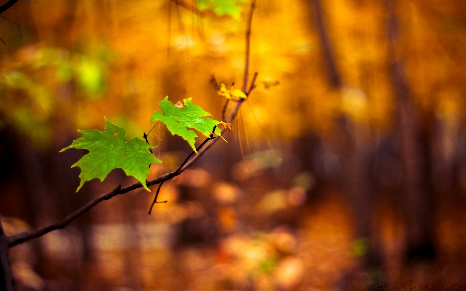 Free Computer Wallpaper Fall Leaves Green Leaves Autumn Android Wallpapers For Free