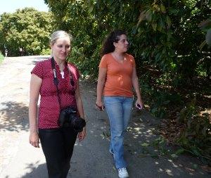 walking through the grove