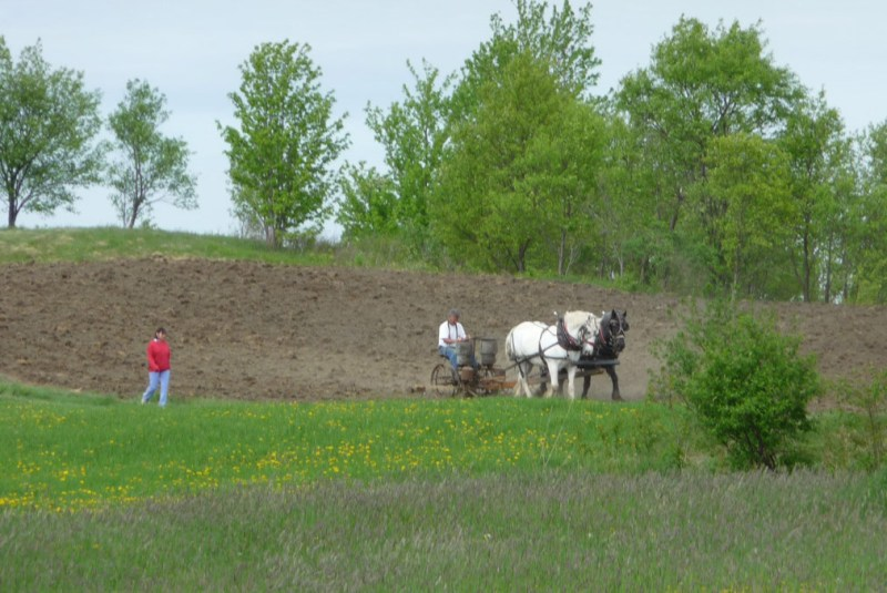 Planting corn in Vermont the old fashioned way