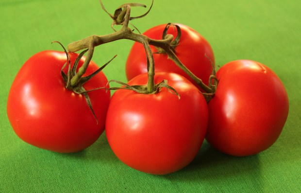 red tomatoes on green
