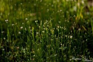 tinygrassflowers