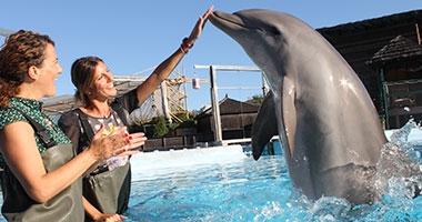 foto-encuentro-con-delfines