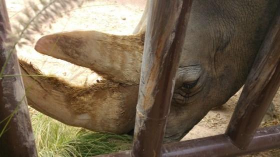 Chiqui procede de un circo, llegó a Terra Natura malnutrida y herida. Manolo y sus chicos la han mimado y han hecho de este parque su casa