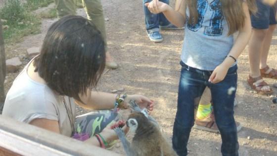 Qué cosa más amorosa estos lemures