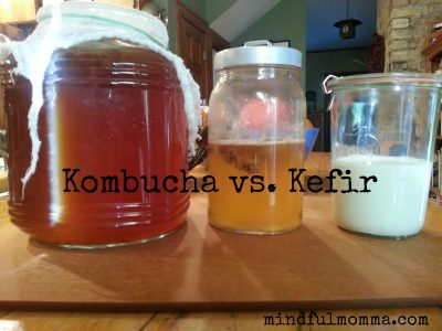 Fermented Drinks Kombucha Kefir