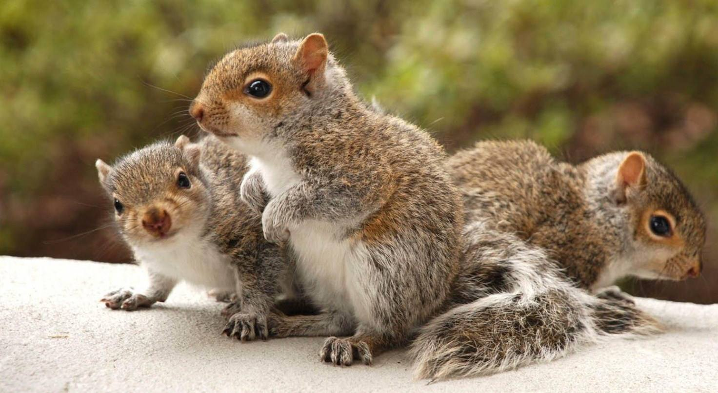 Cute Sleeping Babies Wallpapers Humor Mind Squirrels