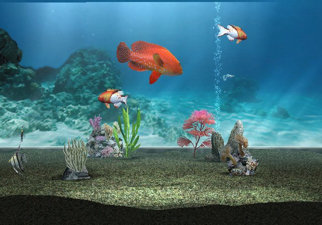 3d Fish Wallpaper Hd Protetor De Tela No Wii Minicastle