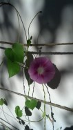 And my pretty flowers on the side of my house
