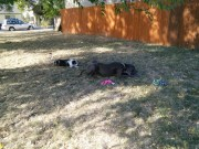 They just laid down together and played independantly with toys that had been long lost!