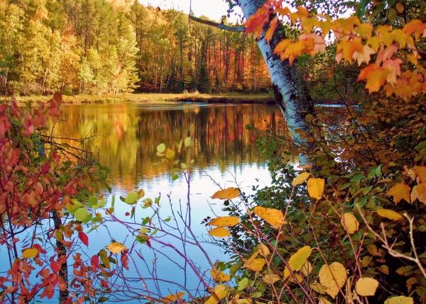 Fall Leave Wallpaper Northern Minnesota Fall Colors Near Peak Brilliance