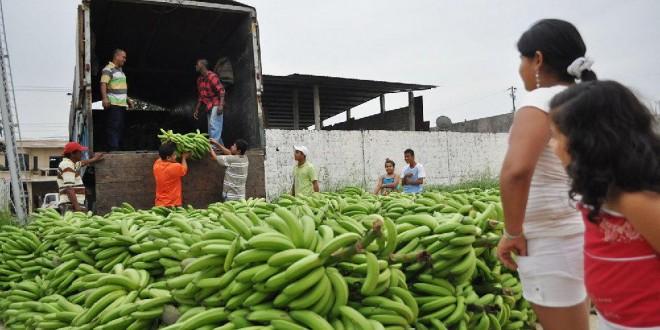 El ICA capacitó a productores de plátano en Puerto Guzmán