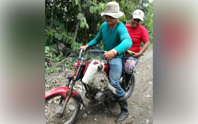 Corpoamazonía rechaza la caza ilegal de Perezoso