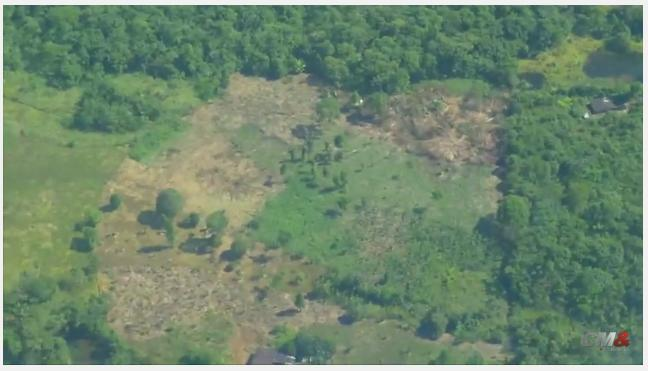 Coca gana a petróleo, guerra por territorio en Putumayo