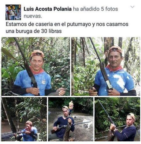 Corpoamazonía rechaza la caza ilegal de Boruga en el Putumayo