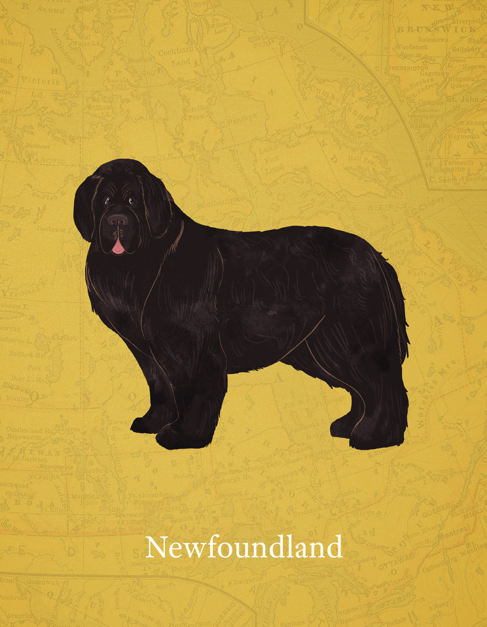 Pet Store Cockburn 5 Dog Breeds From Canada On Behance