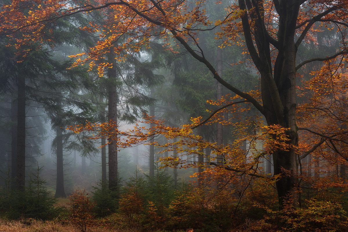 Fall Leaves Pictures Wallpaper Those Dark Autumn Days On Behance