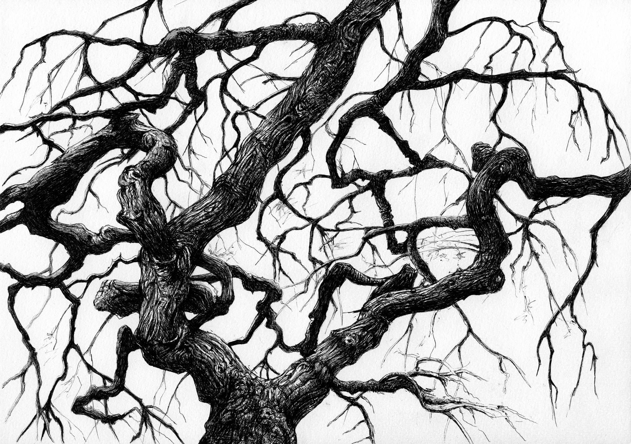 Woody Holzhaus Japanese Maple Tree 1 On Behance
