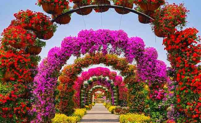 12 Amazing Facts About Dubai Miracle Garden