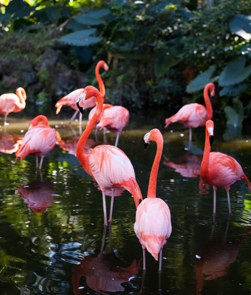 Flamingo Garden Flamingos