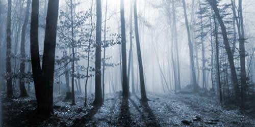 bosque_niebla