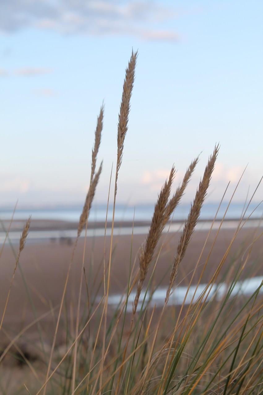 Entre les dunes 9