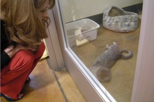 The SPCA client care manager Suzanne Hollis looks at a cat in the SPCA second floor, which is controversially closed to the public. (M.N.K.)
