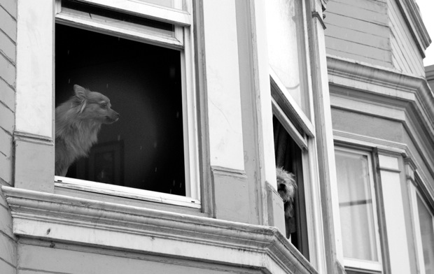 Dogs peek out of a window