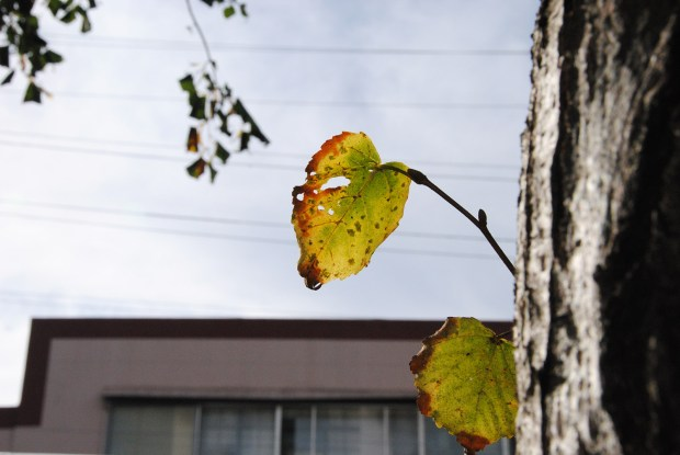 Image shows an autumn leaf