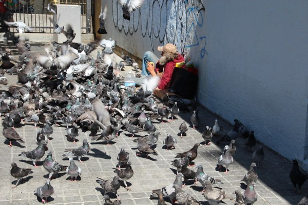 Feeding the birds at 16th and Mission. Photo by Greta Mart.