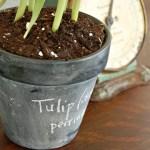 Spring Chalkboard Pots