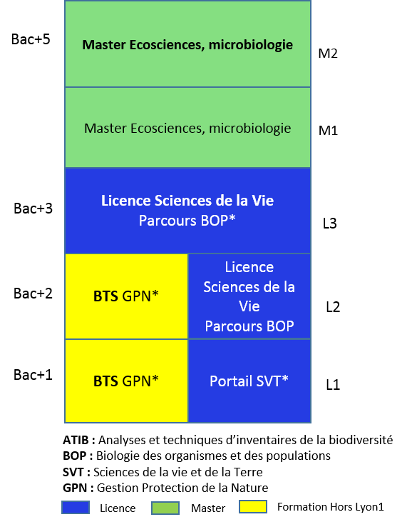 parisien exemple de cv methode