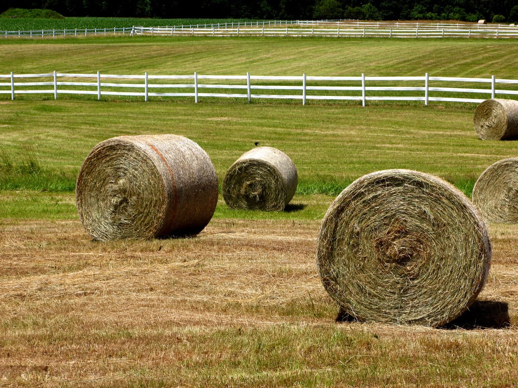 Feed Hay Myth Don T Feed Horses Round Bales