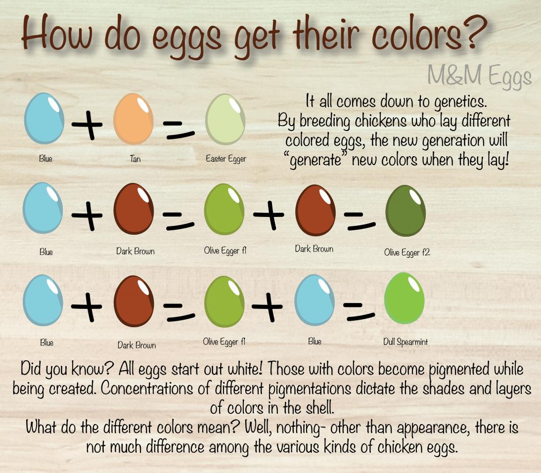 Egg Color Diagram - House Wiring Diagram Symbols •